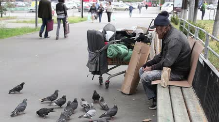 csavargó : Bearded homeless man feeding pigeons in the street