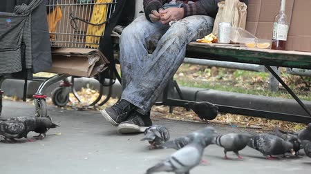 evsiz : Tilt of a homeless guy feeding the pigeons with bread crumbs  Stok Video