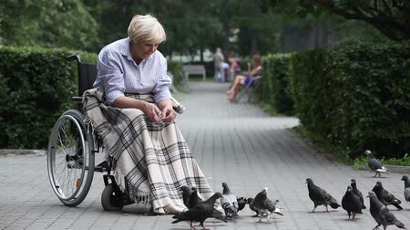 senior lifestyle : Elderly lady in a wheelchair throwing bread crumbs to pigeons
