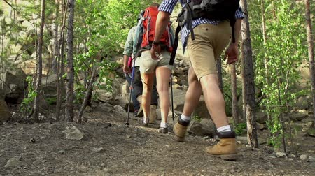 hátizsákkal : Pan of four tourists with backpacks hiking through the woods in slow motion