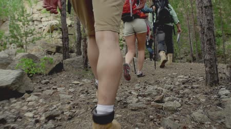 bengala : Low angle by camera following group of hikers making their way through the woods in slow-mo Stock Footage