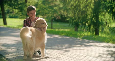 proprietário : Handsome teenage boy calling his retriever and petting it warmly Vídeos