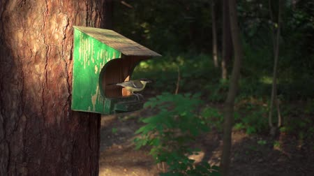 short clip : Slow-mo bird flies to the feeder in the woods, evening light, a beautiful shot of slow motion