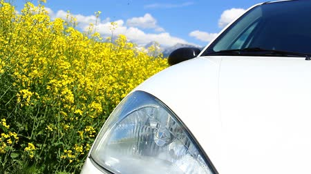 kimse : Rapeseed and a car; green, bio fuel concept. Stok Video