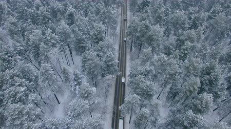 épico : The road in the winter forest.