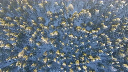 épico : Aerial view of a winter forest. Vídeos