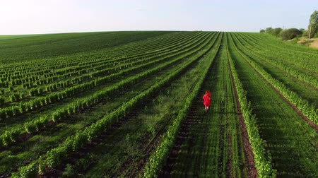 plantio : Aerial view of woman runs on a green plantation in 4K. Camera follow behind Stock Footage