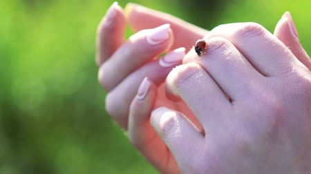 joaninha : Ladybug on the soft womans hands. Slowly