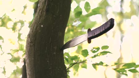 miecz : Knife in the tree in the forest. Military practise