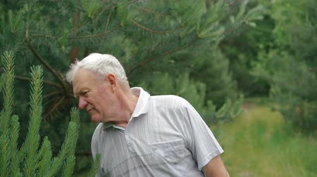 senior lifestyle : Portrain of old wrinkled man breathing evergreen leaves and smiling on a camera