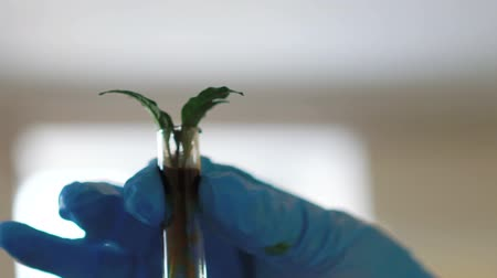 holding steady : Clous-up female scientist analyzing plant in test tube