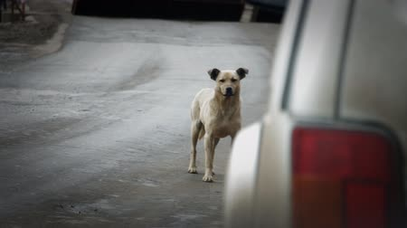 lonely : Stray dog on the road