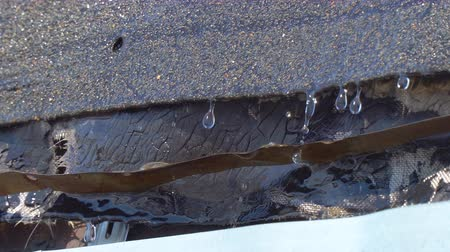straining : Melt water drops drip from the roof of the shed Stock Footage