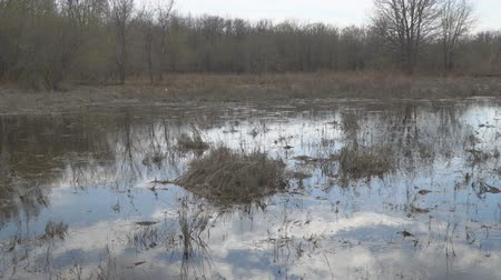 morass : Panorama of marshland. Old Swamp