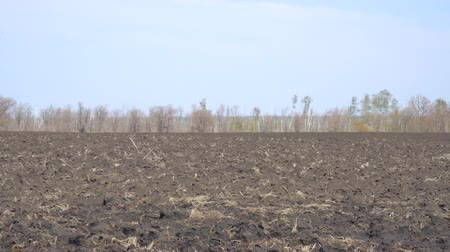 furrow : Field with plowed land. Arable