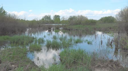 boggy : Panorama of the swamp on a summer day Stock Footage