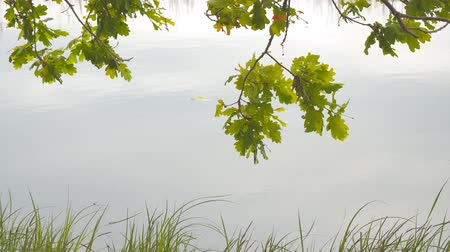 origens : Oak leaves on the background of quiet lake water