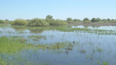 slough : Swampy area flooded with water. Marshlands