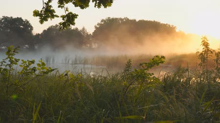 mírumilovnost : Morning fog on a quiet lake in the rays of the rising sun