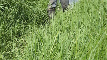 thick : A man walks along the thick grass in khaki boots of protective color