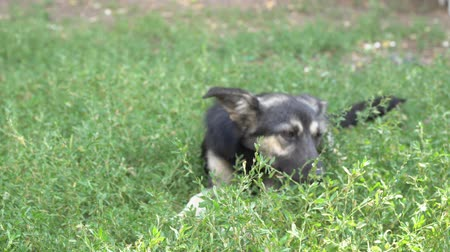 дворняжка : Portrait of a homeless dog mongrels on the grass