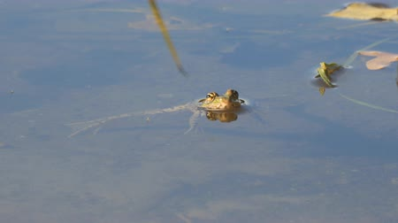 sivilceli : The frog is in the water, then jumps to the side