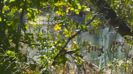 избирательный подход : View of the pond water through the leaves and branches. Selective focus and blurred background