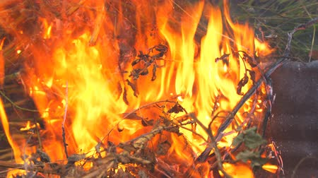 bush fire : Burning grass close-up. Stock Footage