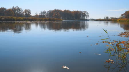 idílico : Autumn leaves float on water. Lake or river with quiet water in the autumn season. Sunny weather Vídeos