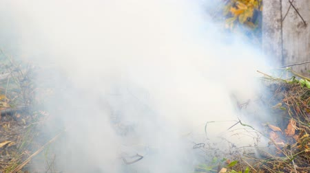 emissions : Burning dry grass close-up. The smoke from the burning grass Stock Footage