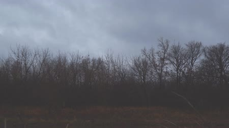 gloomy sky : Dark autumn storm clouds fly over the bare trees of the autumn forest in the evening. Camera panning