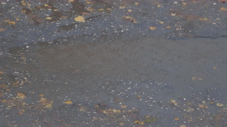 pocsolya : Drops of autumn rain in a puddle on the pavement. In a puddle of autumn leaves
