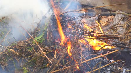 bush fire : Burning dry grass close-up Stock Footage