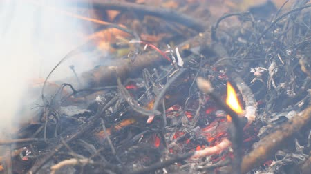 bush fire : Ash and coals from burning dry grass