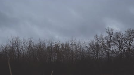 cloud scape : Dark autumn storm clouds fly over the bare trees of the autumn forest in the evening Stock Footage