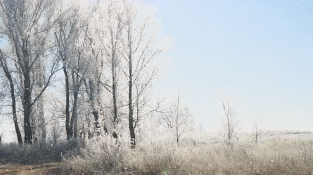 szron : Early winter. The sun over Meadows, bushes and trees covered with frost. Fabulous Winter landscape