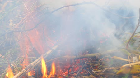 verbrannt : Burning dry grass close-up. The smoke from the burning grass Videos