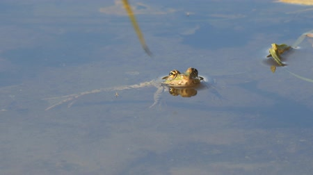 žába : The frog is in the water, then jumps to the side