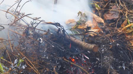 bush fire : Burning dry grass close-up. The smoke from the burning grass Stock Footage