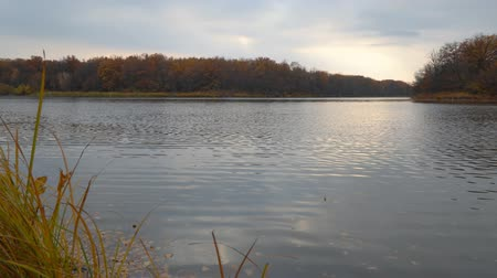 solitário : Autumn lake on the shore of the forest on a cloudy day. Autumn landscape
