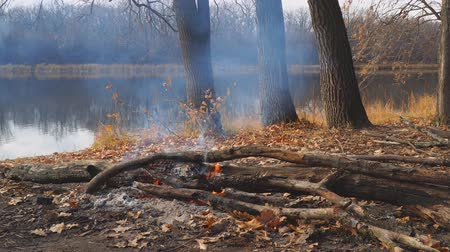 à beira do lago : Burning campfire on the shore of an autumn forest lake. Camera panning