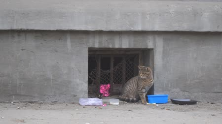 undomesticated cat : Homeless stray cat sits on a wall, then leaves