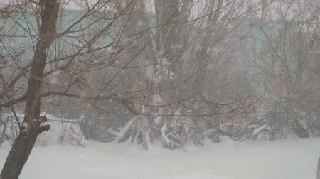 esparso : Snow slowly falling on the background of trees Stock Footage