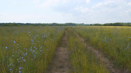 enrolamento : Rural dirt road through meadows and pastures Stock Footage