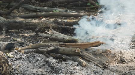 kavrulmak : Firewood Smoking in the campfire Stok Video