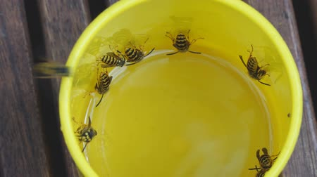 スティンガー : Wasps flew into a yellow mug and drink lemonade. Close up 動画素材
