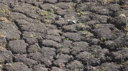 erozyon : Dry soil cracked by drought