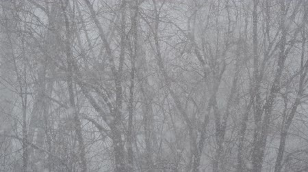 esparso : The snow is falling against the tree. Snowstorm.