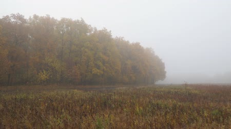 Large autumn meadow with stale grass. Beyond the meadow is a forest with yellow foliage in the fog. Landscape with fog in late autumn. Camera panning