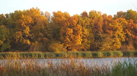 Beautiful autumn orange-yellow forest on the shore of the lake in Sunny weather